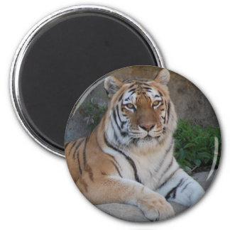 Tiger Love Fridge Magnets