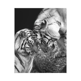 Tiger Love Photo on Canvas Wrap