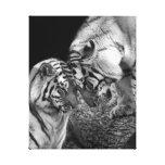 Tiger Love Photo on Canvas Wrap Canvas Print