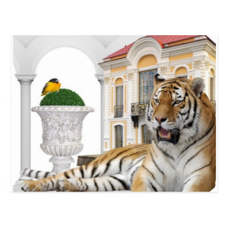 Tiger Love Postcard