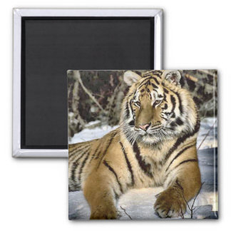 Tiger Lovers Art Gifts 2 Inch Square Magnet