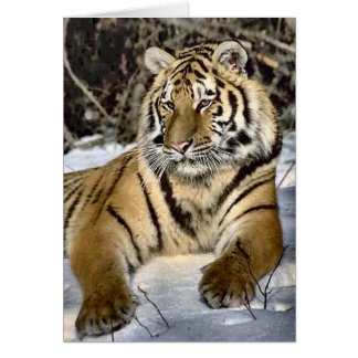Tiger Lovers Art Gifts Cards