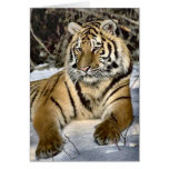 Tiger Lovers Art Gifts Greeting Card
