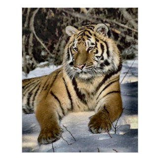 Tiger Lovers Art Gifts Posters