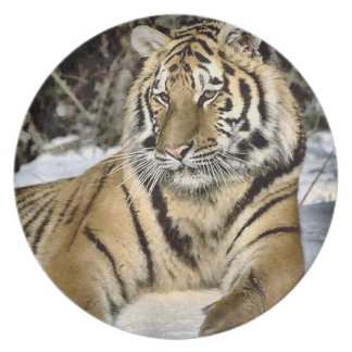 Tiger Lovers Wildlife Dinner Plate