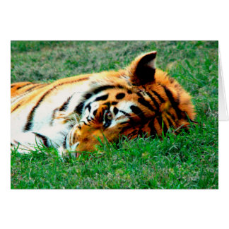 Tiger Lying down Note Card