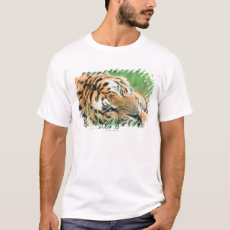 Tiger lying in grass T-Shirt