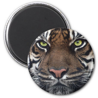 Tiger Magnet