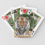 Tiger male head beautiful photo portrait, gift card deck
