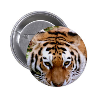 Tiger Markings  Button