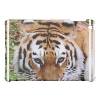 Tiger Markings  iPad Case