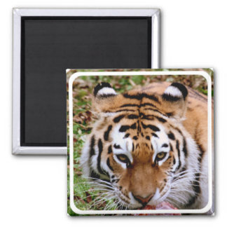 Tiger Markings Magnet Refrigerator Magnet
