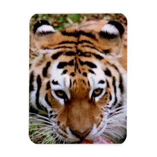 Tiger Markings  Premium Magnet Flexible Magnets