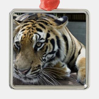 Tiger Metal Ornament