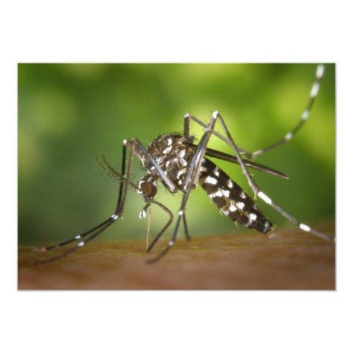 Tiger mosquito 5x7 paper invitation card