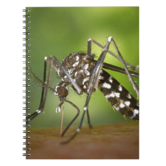 Tiger mosquito notebooks