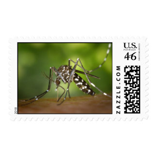 Tiger mosquito postage stamp