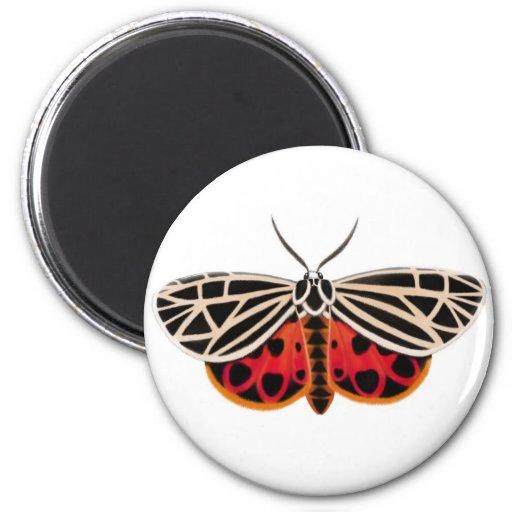 Tiger Moth Magnet