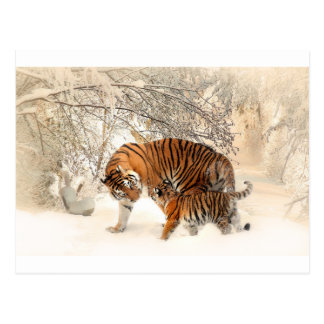 Tiger Mother and baby Postcard