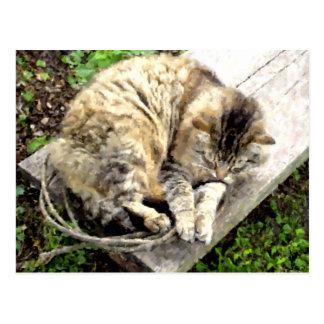 Tiger Nap Postcard