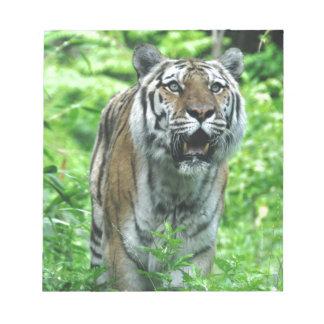 Tiger Scratch Pads