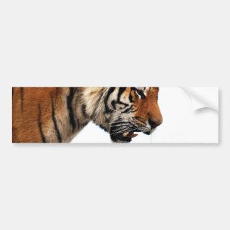 Tiger on the hunt bumper sticker