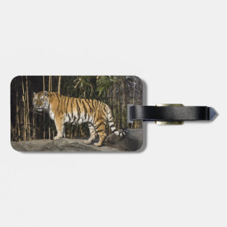 Tiger on the Rocks Luggage Tag