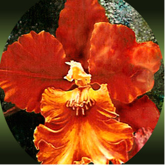 Tiger Orchid Photo Sculpture