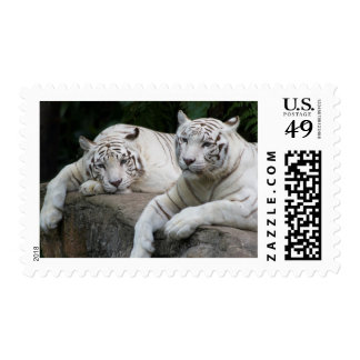 Tiger Pair Postage Stamps