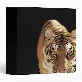 Tiger (Panthera tigris) Binder