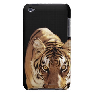 Tiger (Panthera tigris) iPod Touch Cases