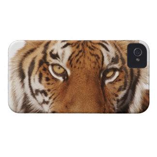Tiger (Panthera tigris), close-up iPhone 4 Case-Mate Cases