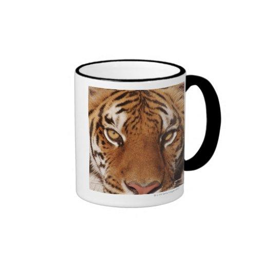 Tiger (Panthera tigris), close-up Coffee Mugs