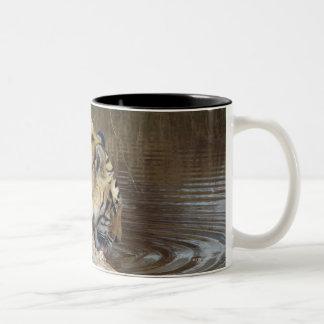 Tiger (Panthera tigris) lapping water up from a Two-Tone Coffee Mug