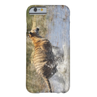 Tiger (Panthera tigris) running through water. Barely There iPhone 6 Case