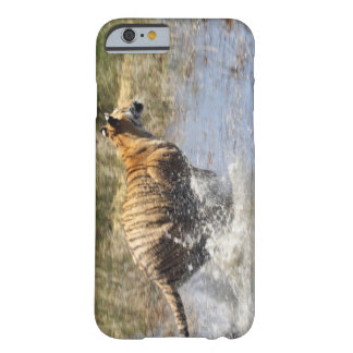 Tiger (Panthera tigris) running through water. Barely There iPhone 6 Case
