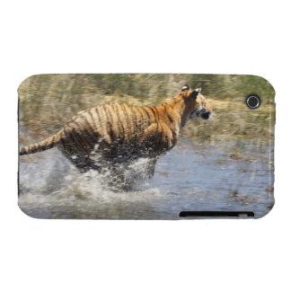 Tiger (Panthera tigris) running through water. iPhone 3 Case