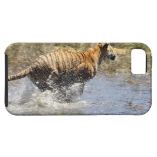 Tiger (Panthera tigris) running through water. iPhone SE/5/5s Case