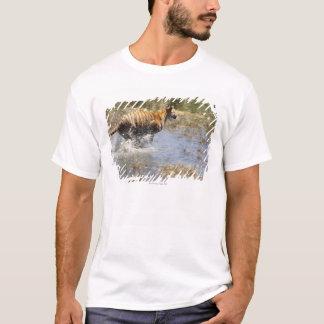 Tiger (Panthera tigris) running through water. T-Shirt