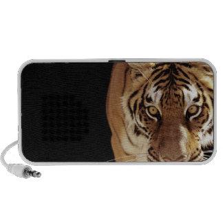 Tiger (Panthera tigris) Speaker System