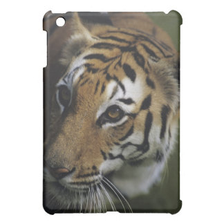 Tiger (Panthera tigris) standing, close-up of Case For The iPad Mini