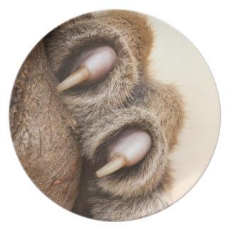 Tiger paw melamine plate