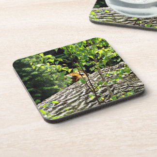 Tiger Peek-a-boo Hard Plastic Coaster