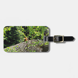 Tiger Peek-a-boo Luggage Tag