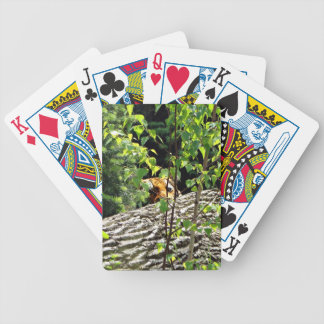 Tiger Peek-a-boo Playing Card Bicycle Playing Cards