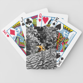 Tiger Peek-a-boo Playing Cards