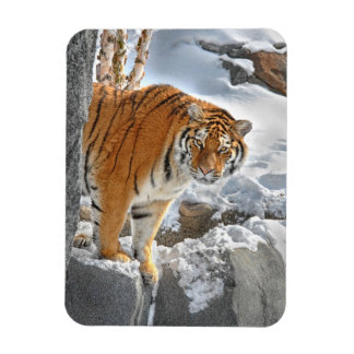 Tiger Peek Magnet