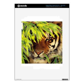 Tiger Peers Behind A Leaf iPad 3 Skins
