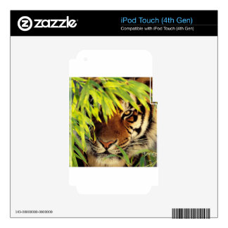 Tiger Peers Behind A Leaf iPod Touch 4G Decal