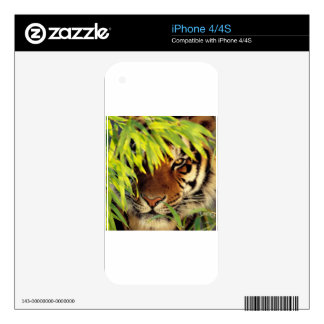 Tiger Peers Behind A Leaf Skin For The iPhone 4
